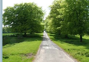 The Beech Lined Drive